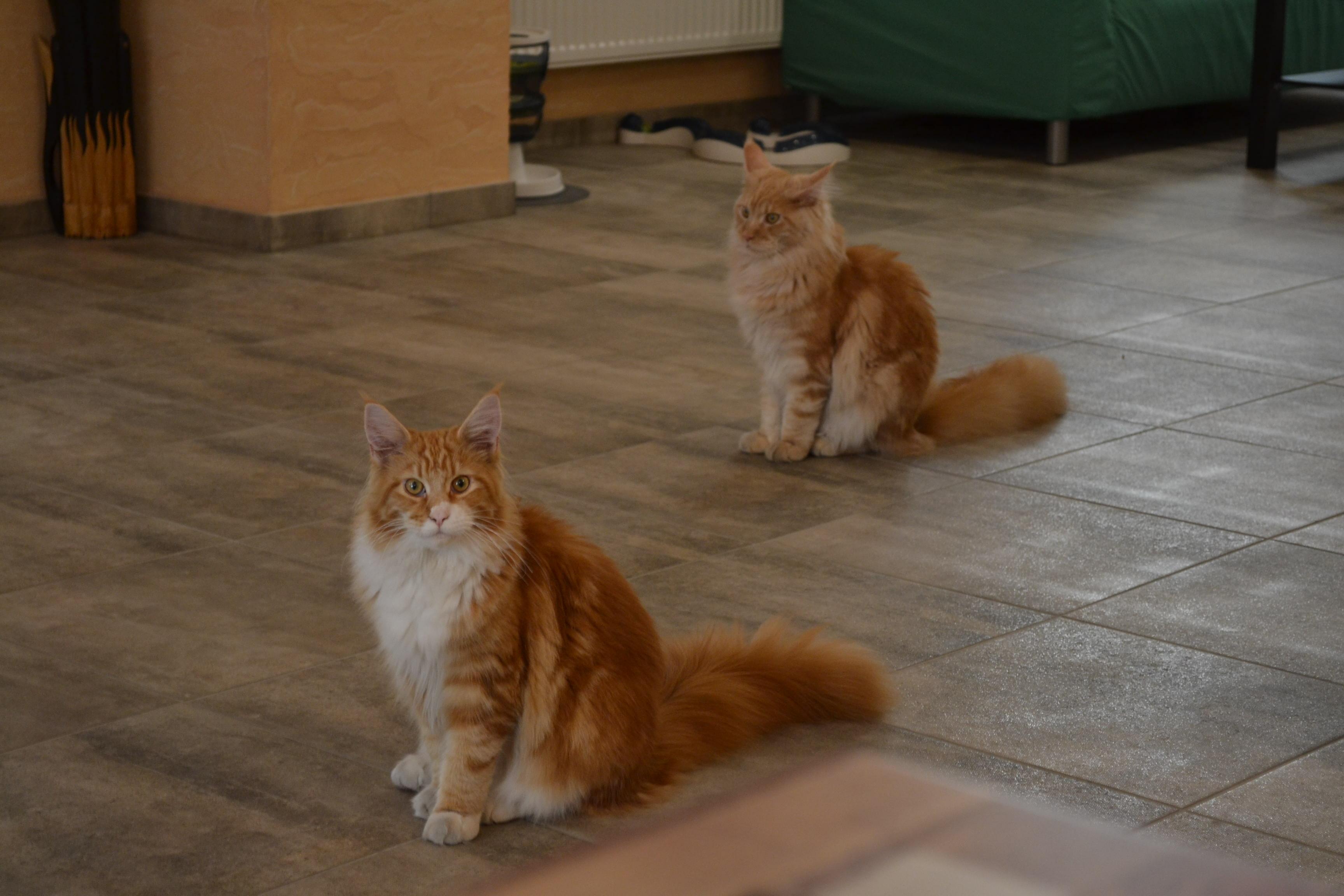 Velké zadky a kočička